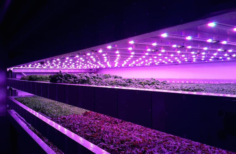 Emirates Airline Vertical Farm